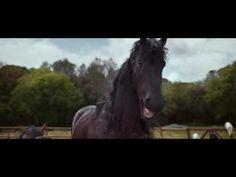 Volkswagen Tiguan ad: Laughing Horses