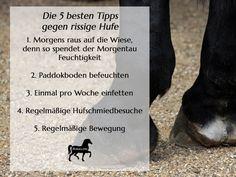 Rissige Hufe – was kann man dagegen tun? Ein Problem, welches vielen Reitern in Deutschland eine menge Kopfschmerzen bereitet sind trockene oder brüchige Hufe. Dieses Problem tritt häufig zum Sommeranfang auf, wenn die Hufe einen feuchten Winter mitgemacht haben und die ersten wirklich heißen Tage anbrechen.