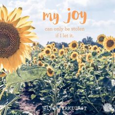 My joy can only be stolen if I let it. - Lysa TerKeurst