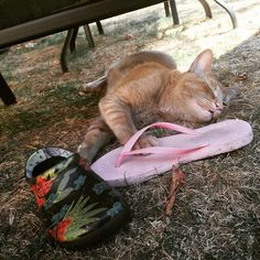 instagram.com/snorrithecat    this cat steals things.  It got so bad that the owner got a camera to see where it would go and what it would take    lol klepto kitty :)