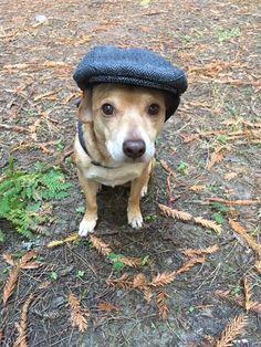 Dapper Norris   http://ift.tt/2hTqHYR via /r/dogpictures http://ift.tt/2iRWkik  #lovabledogsaroundtheworld