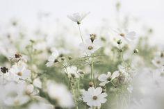 輕輕的 Lightly | Flickr - Photo Sharing!