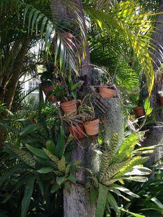 Bromeliads in a Sunrise Beach garden Beach Gardens, Beach House, Sunrise, Plants, Beach Homes, Plant, Sunrises, Planets