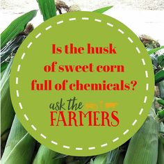 Is the husk of sweet corn full of chemicals?