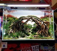 Betta Fish Tank Setup Ideas That Make Sense! Planted Aquarium, Aquarium Garden, Aquarium Landscape, Glass Aquarium, Diy Aquarium, Tropical Aquarium, Aquarium Design, Saltwater Aquarium, Aquarium Fish Tank