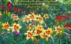Proverbs 15:7
