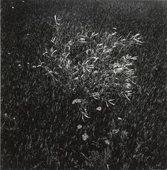 """Harry Callahan. Untitled. 1947. Gelatin silver print. 6 3/4 x 6 5/8"""" (17.1 x 16.8 cm). Purchase. 208.1962. © 2018 The Estate of Harry Callahan. Photography"""