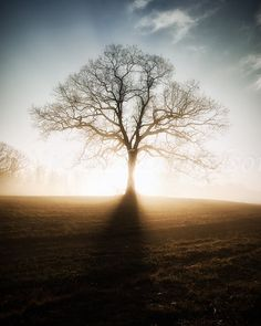 Morning Sunrise Tree with Fog Landscape Photo by MDanielsonPhoto, $24.00