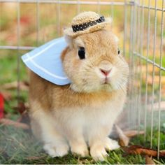 Conejitos mascota....... y no para el asado 1