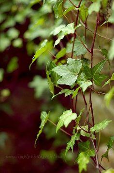 Green and brown in nature / Ivy Ivy House, Rare Flowers, My Secret Garden, Belleza Natural, Garden Cottage, Dream Garden, Green And Brown, Shades Of Green, Beautiful Gardens