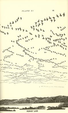 The illustration 'Forney Lake' from the book 'Waterfowl in Iowa.' / The Bookworks Bird Illustration, Grafik Design, Bird Art, Iowa, Sketches, Drawings, Artwork, Printmaking, Migratory Birds
