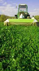 Lawn Fertilizer - New Lawn Starter Fertilizer - How To Fertilize Bahia Grass