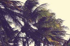 Palm Trees, Bali, Island, Explore, Plants, Palm Plants, Islands, Plant, Planets