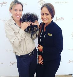 Minus the silly and super excited look on my face - I'm in love with this little #echidna named Turtle from the amazing #currumbin #currumbinwildlifesanctuary of which @jupitersgc is a proud community sponsor #animallove #ate2016 #VIPs #morningwelcome #internationaldelegates by grothy85 http://ift.tt/1X9mXhV