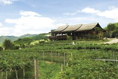 The  Hua Hin Hills Vineyard, which produces the award-winning range of Monsoon Valley wines, has recently launched a new day trip entitled the Hua Hin Wine Safari.  #wherethailand #huahin #thailand