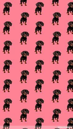 Wiener doggies