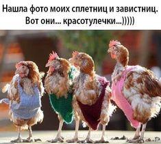 Funny Memes, Hilarious, Jokes, Humor, Christmas Ornaments, Holiday Decor, Animals, Yandex, Google