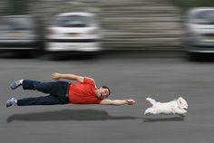 Quelques conseils de Polytrans pour éviter des accidents avec d'autres animaux lors d'une promenade.
