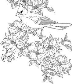 bird virginia cardinal coloring page - Printable Coloring Pages Birds