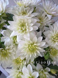 Fioreria Oltre/ White dahlias