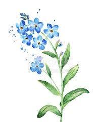Image result for forget me not botanical illustration