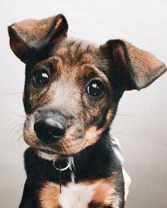 Mister Woof Loves... | Kaufmann's Puppy Training