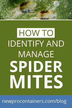 On the blog: How to Identify and Manage Spider Mites