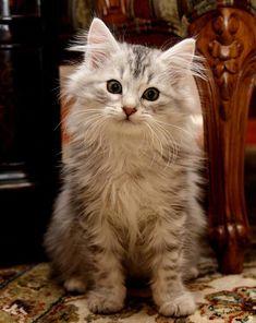 Awwwwwwwwwww- http://goodmorningkitten.com/kitten/1225/