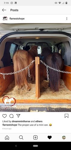 2 minature horses in a van. (None of the photos are mine and I do not claim to own them.) They are just minature horse therapy inspiration. Horse Therapy, Miniatures, Van, Horses, Photos, Animals, Inspiration, Biblical Inspiration, Pictures