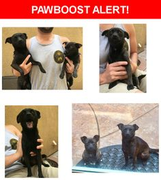 Is this your lost pet? Found in Chino, CA 91710. Please spread the word so we can find the owner!  2 small black Chihuahuas. Super friendly and sweet about 1 to 2 years old. One male and one female possibly siblings. No collars. Not chipped.  College Park Avenue, Chino, CA