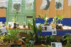 2ª Feria de la Biodiversidad Biológica y Cultural de la Chinantla