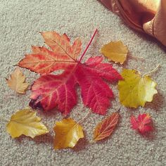 Leaf collecting! Its fall!