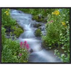Global Gallery Sneezeweed and Indian Paintbrush Beside Stream, Yankee Boy Basin, Colorado by Tim Fitzharris Framed Photographic Print on Canvas Siz...