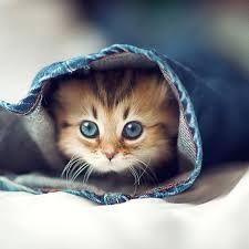 A cat<3