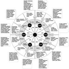 Basics: body meridians mechanics  