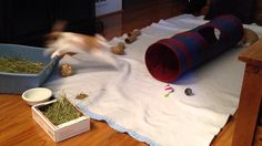 Schnuffles and Truffles Playing - YouTube