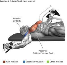 CHEST - DECLINE BENCH CABLE FLYES