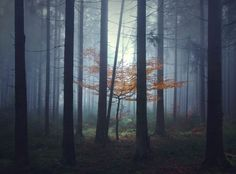 Brothers Grimm: Misty forest