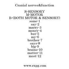 cranial nerves mnemonic - Google Search
