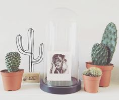 Draad cactus mini Hippe draad cactus, leuk in elk interieur en gemakkelijk in onderhoud!      Kleur: zwart metaal icm stijgerhout     Hoogte: 31 cm     Merk: Bluft-interieur -