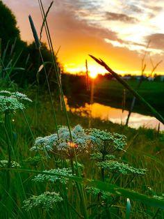 Pinkit korkokengät: Auringonlaskua metsästämässä