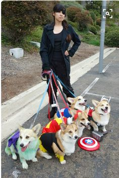 you've never been this cool walking your dogs