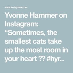 """Yvonne Hammer on Instagram: """"Sometimes, the smallest cats take up the most room in your heart ✨🤍 #hyresilienz #leben #lieben #lachen #chillen #genießen #tiere"""" Small Cat, Your Heart, Photo And Video, Cats, Room, Instagram, Life, Bedroom, Gatos"""