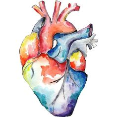 Watercolour Anatomy Art- Heart ❤ liked on Polyvore featuring home, home decor, wall art, paper wall art, heart home decor, colorful wall art, heart wall art and watercolor painting