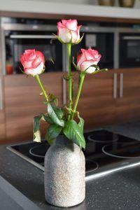 Jumilia Glass Vase, Roses, Plants, Home Decor, Homemade Home Decor, Pink, Flora, Rose, Plant