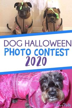 Dog Halloween Photo Contest 2020 - Fidose of Reality Best Dog Halloween Costumes, Halloween Photos, Dog Costumes, Halloween Themes, Dog Ear Wash, Oils For Dogs, Trick Or Treat Bags, Dog Dresses, Photo Contest