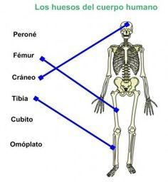 Lista de los huesos del esqueleto axial Salud y bienestar