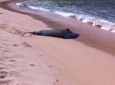 Monk seal | Flickr - Photo Sharing!