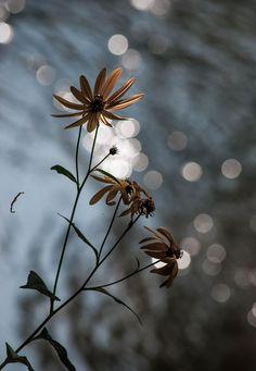 Pets, Home & Garden: 8 Gardening jobs for autumn Cactus E Suculentas, Beautiful Flowers, Beautiful Pictures, Photos Originales, Beautiful World, Mother Nature, Flower Power, Photo Art, Nature Photography