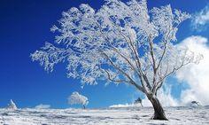 PRANOSTIKA NA STREDU 7. DECEMBRA: V decembri si ešte zima robí žarty, ale v januári už kraľuje